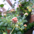 Photos: 2011.11 garden 083