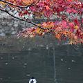 写真: 円通寺 - 12