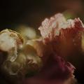 写真: 枯れ落ちても桜は桜