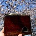 Photos: 燗銅壺と花見 翔鶴