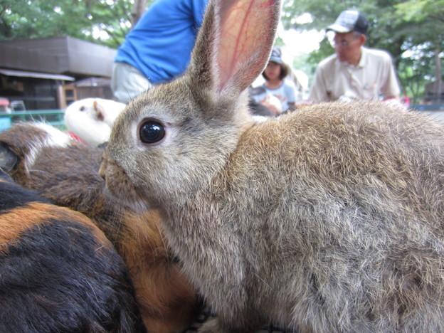 ウサギ (2)