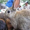 Photos: ウサギ (2)