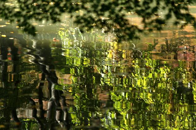 ハス池のゆらめき