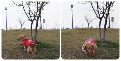 20120311 お散歩、雨降り…