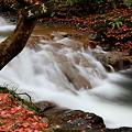七ッ滝 5の滝 モミジの落ち葉^^