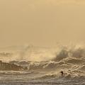 写真: 日本海の荒波とカモメ