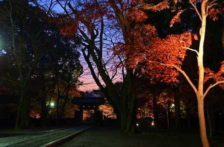 夕暮紅葉の参道