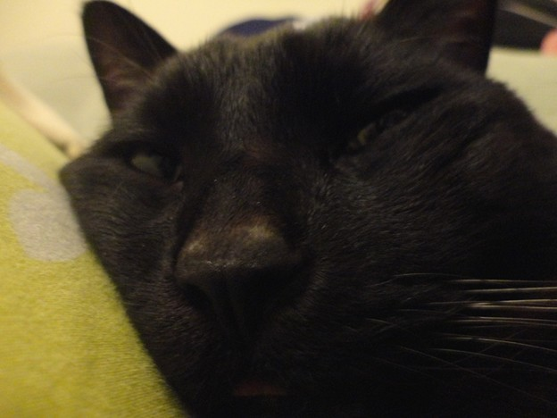 Ekkun_Sleepy-Dec24-2011-2