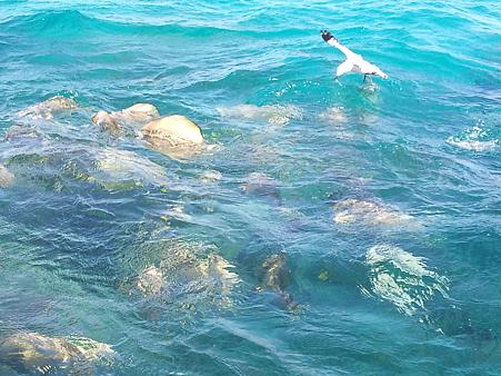 撒いた餌に殺到する魚たち