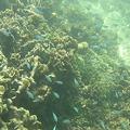Photos: アルパット島近くで熱帯魚その15