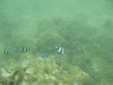 相方撮影の熱帯魚12