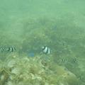 写真: 相方撮影の熱帯魚12