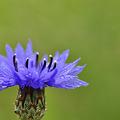 写真: 青色の涼